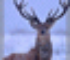Hunting Unlimited 2010 icon